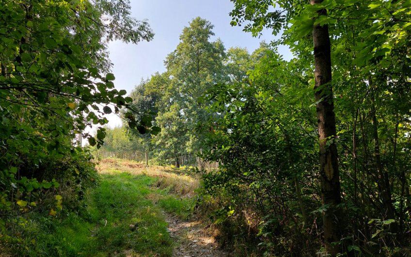 SULISTROWICE – Malownicza działka z widokiem na Ślężę, z możliwością zabudowy siedliskowej